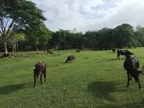 Esta es la belleza de nuestra tierra Honduras