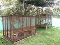 Reproducción de Zarigueyas- Robles - Jamundi- Valle del Cauca