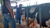 clínica en bovinos