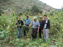 Cultivo de maíz Chala
