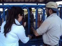 las mujeres en el manejo del ganado