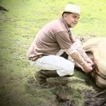 Cirugia equinos