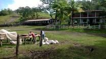 Finca en venta apta para cafe y ganado de leche