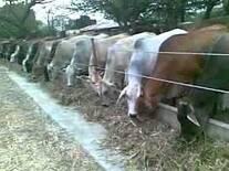 Venta de finca para ganaderia engorde de novillos