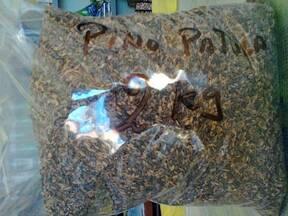 www.agriperia.com /Pino Patula(semilla )