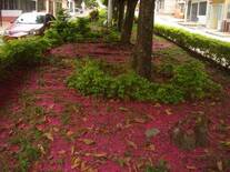 Un tapete natural que disfrutan los microorganismos e insectos, por que el hombre lo pasa iadvertido.