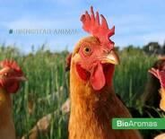 BioAromas es Bienestar Animal