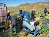 Capacitación en la preparación de ensilados en productores alpaqueros
