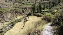 Pasturas Alto Andina Perú Lima