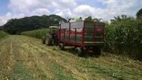 corte de maíz para silaje