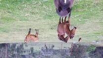 Clinica equinos a campo