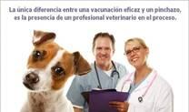 Vacunalos correctamente