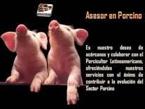 Porcicultor Latinoamericano