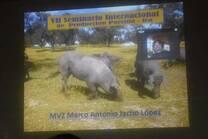 La producción porcina sostenible en La Unión Europea. Ica-Perú