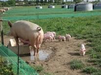 Parcela de lactación, Francia.