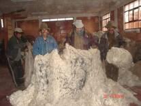 Clasificación de fibra de alpacas