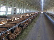 Columbia River Dairy