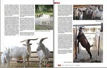 El manejo reproductivo y el encaste en caprinos (2)