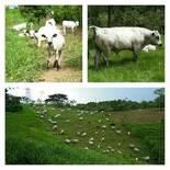 La ganadería sostenible