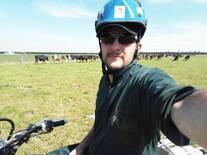 Arriando las vacas para el Ordeño de la tarde.