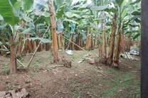 Finca orgánica Carmita Products