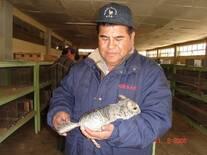 Chinchilla . Lampa Puno Peru Enero 2017