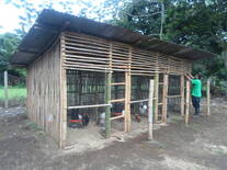Gallinero rustico de Bambu