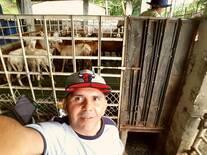 Ecografias en ovinos