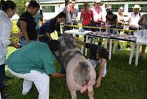Capacitación en Reproducción porcina_2