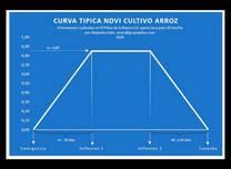 Curva típica NDVI Cultivo Arroz