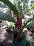 Cultivo orgánico de orquídeas