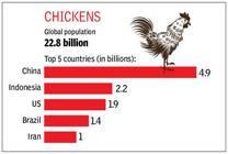 Los 5 países que tienen más pollos en el mundo