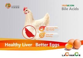 Los ácidos biliares se centran en proteger la salud del hígado y reducir la mortalidad de las ponedoras
