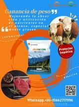 Innovador producto para mejorar el crecimiento y la calidad de carne de ganado bovino