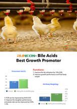 Los ácidos biliares son el mejor promotor del crecimiento de los pollos de engorde.
