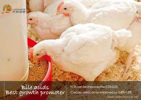¿Quiere mejorar el rendimiento de crecimiento de los pollos de engorde?