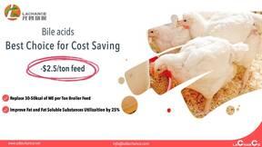 Los ácidos biliares ayudan a reducir el costo del alimento $ 2.5 por tonelada de alimento