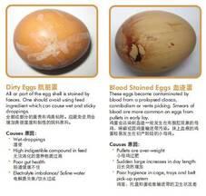 Acidos biliares mejora la calidad de huevos de las ponedoras