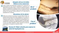 Los ácidos biliares mejoran la salud del hepatopancreas de los camarones