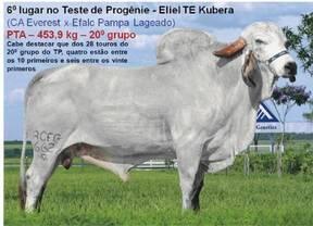 Teste de Progênie - Eliel TE Kubera