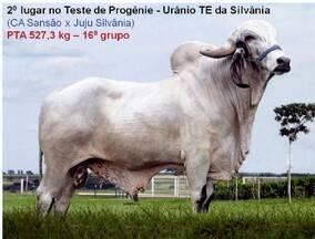 Teste de Progênie - Urâneo TE da Silvânia