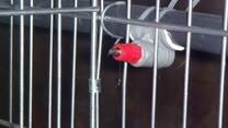 Bebederos automáticos para conejos