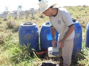 Suplementação de bovinos Nelore a pasto