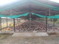Granja Avicola Golden Chicken