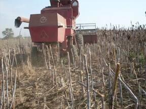 maquina cosechando en chaco taartago