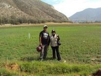 Supervisando la alfalfa