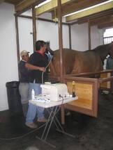 Evaluación ultrasonografica de aparato reproductor de la yegua
