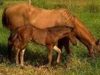Equino con un mes de nacido