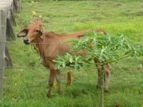 granja el chaparral