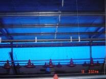 Ubicación de los equipos de automatización dentro de un galpón avícola